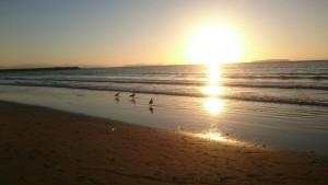 カモメと海と夕日