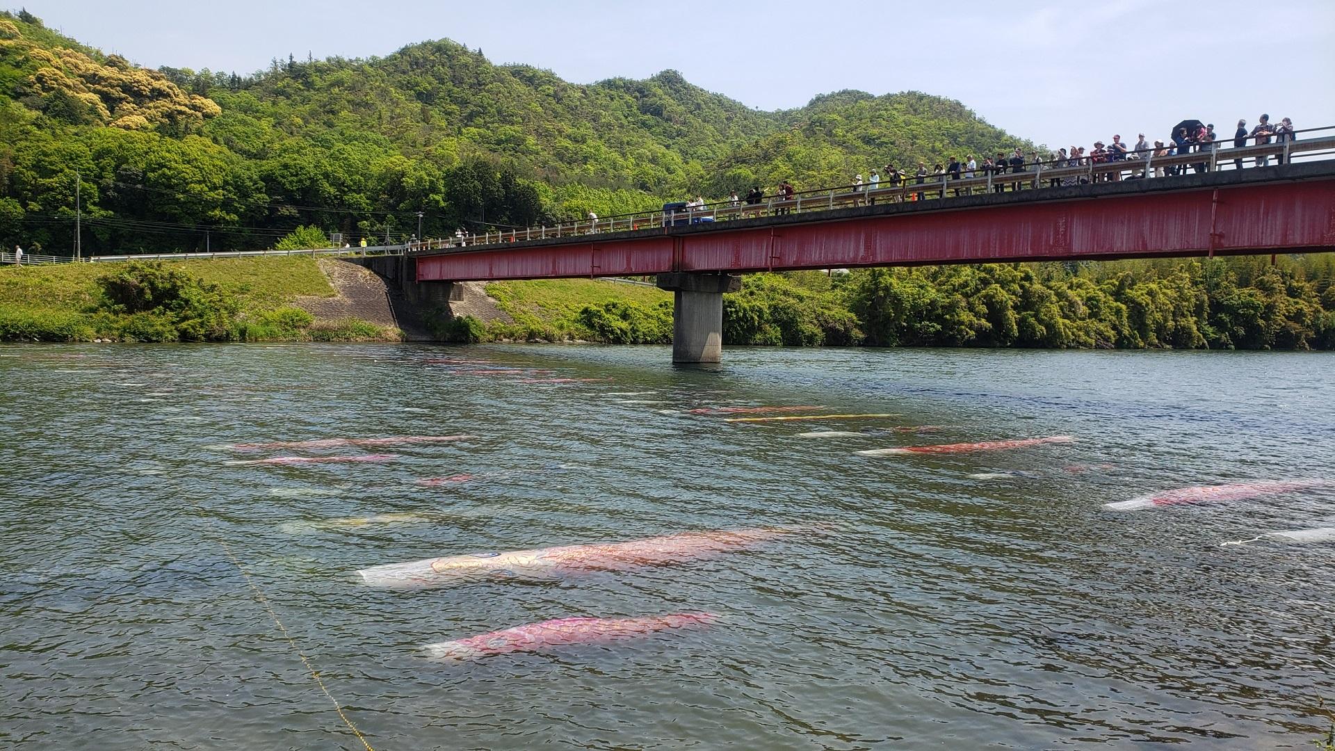 佐波川を泳ぐ鯉のぼり