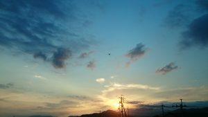 夕日とトンボ